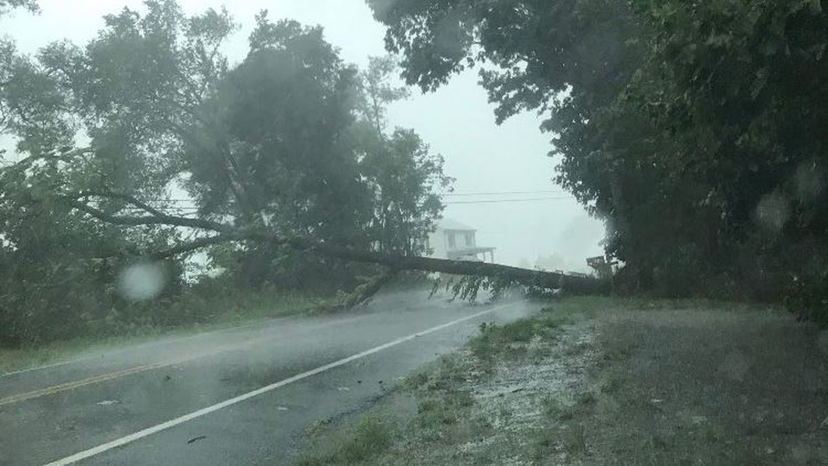Photo of a tree down across State Road 602 | submitted to WHSV by Eddie Breeden