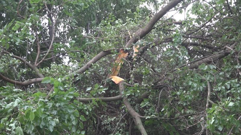 Storm debris in Timberville 7/7/21