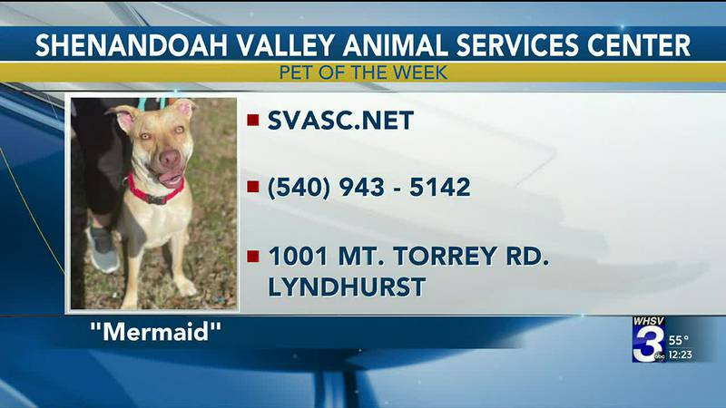 Pet of the Week - March 24
