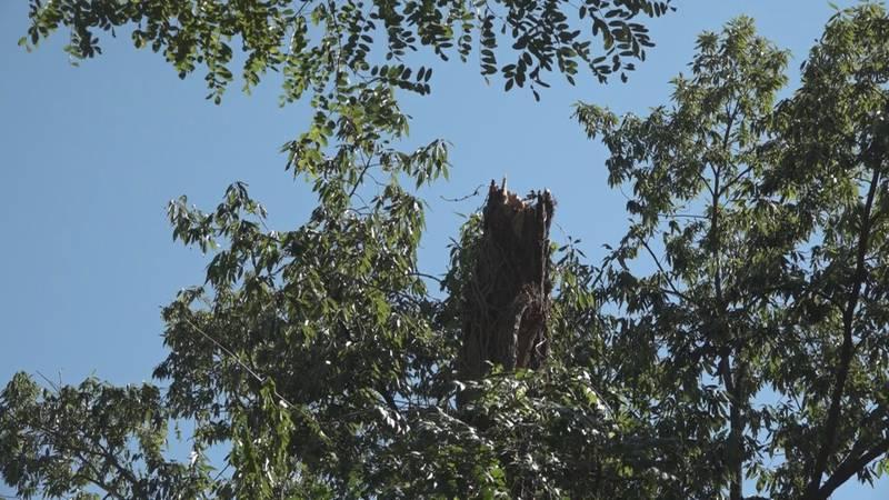 A broken tree at Natural Chimneys Park