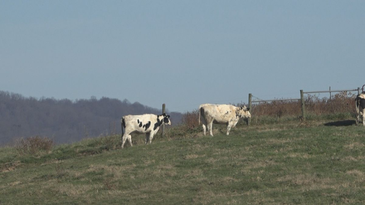 There are two factors that can bring milk prices down: mild temperatures and less fluctuation...