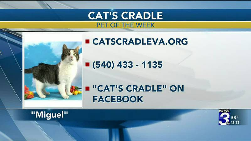 Pet of the Week - March 31