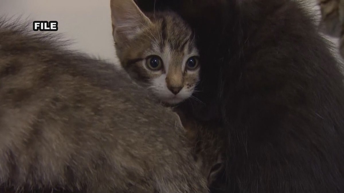 The Waynesboro City Council has introduced a plan to limit the number of pets per home and...