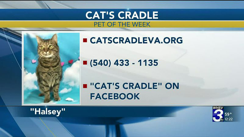 Pet of the Week - February 24