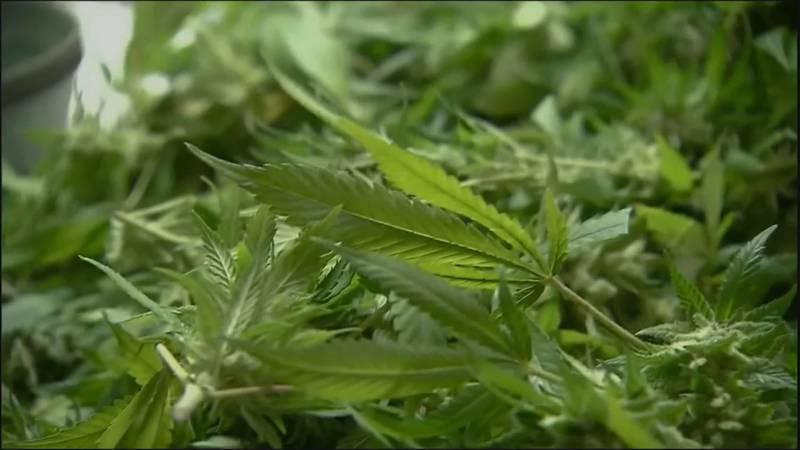 Virginia's watchdog agency is recommending adjustments to the marijuana legislation lawmakers...