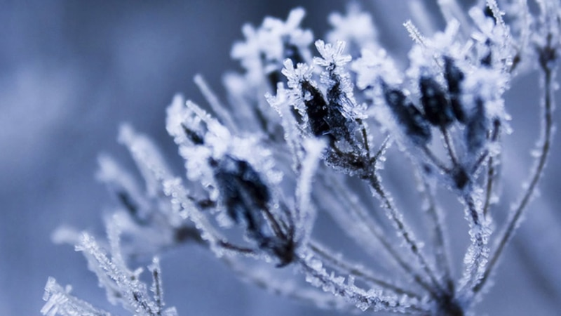 It takes until about May to stop seeing freezing temperatures or frost in our area.