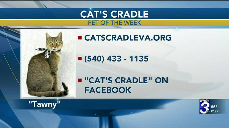 Pet of the Week - March 10