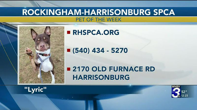 Pet of the Week - March 3