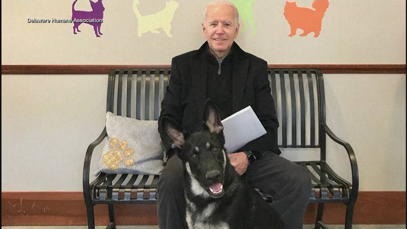 Major Biden inspires others to rescue shelter pets.