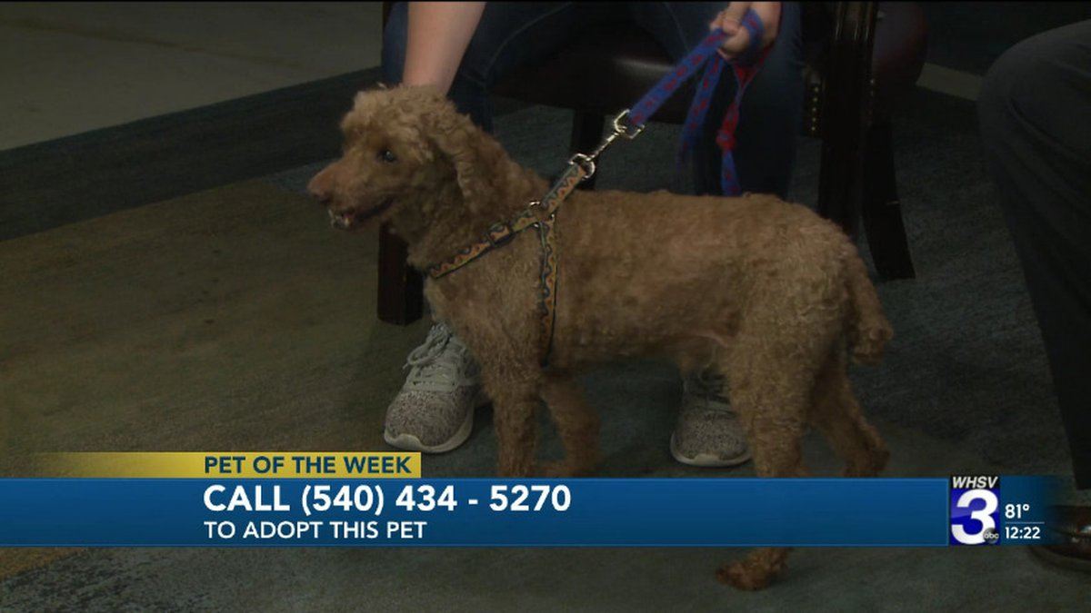 Frisky, our Pet of the Week, looks for his forever home on WHSV News at Noon.