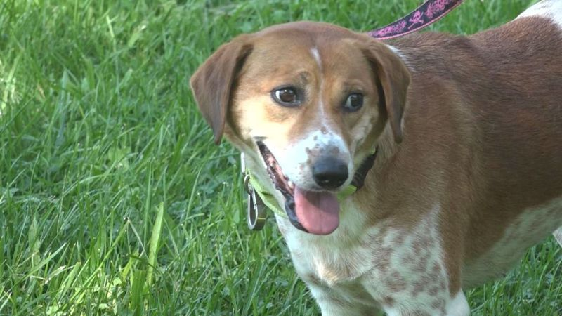 HFD teams up with SPCA to promote heat safety