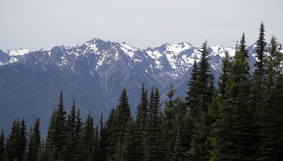 In this photo taken Tuesday, July 9, 2019, the Olympic Mountains are seen beyond a forest from...