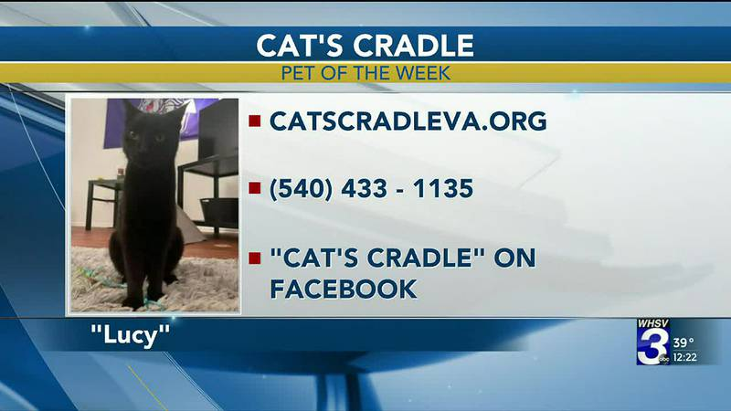 Pet of the Week - February 3