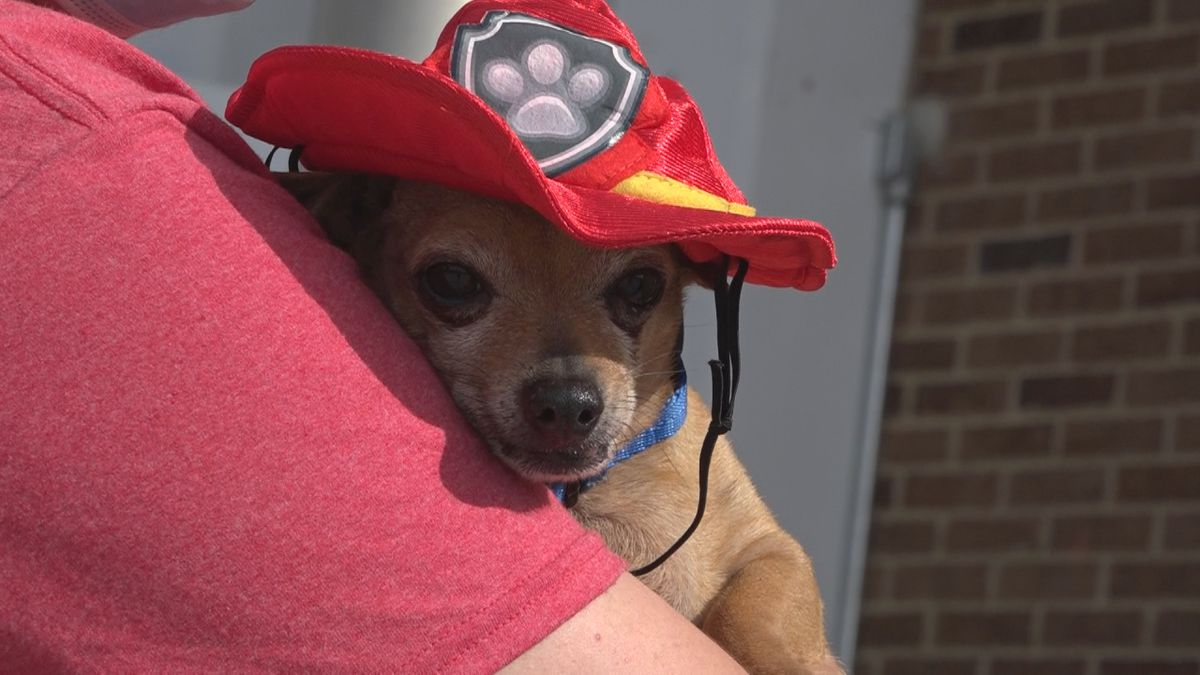 HFD AND RHSPCA FIRE SAFETY EVENT