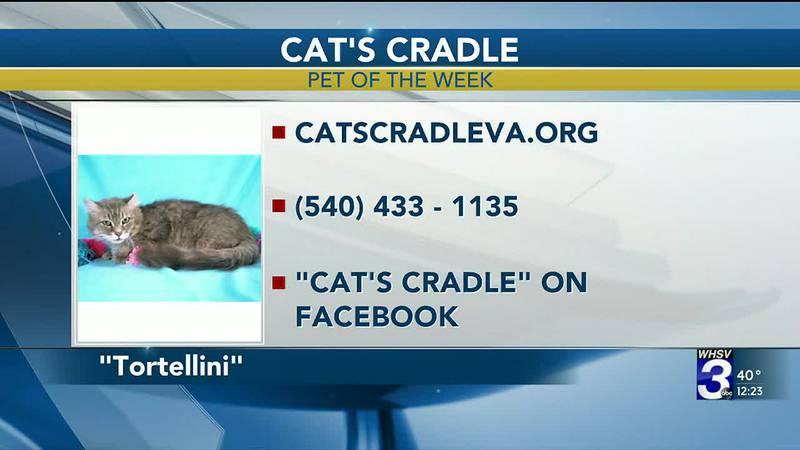 Pet of the Week - November 18