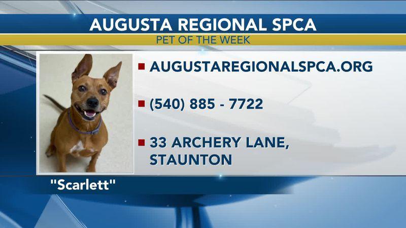 Pet of the Week - August 12