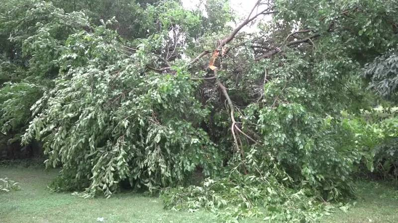 Several reports of tree damage occurred in Timberville
