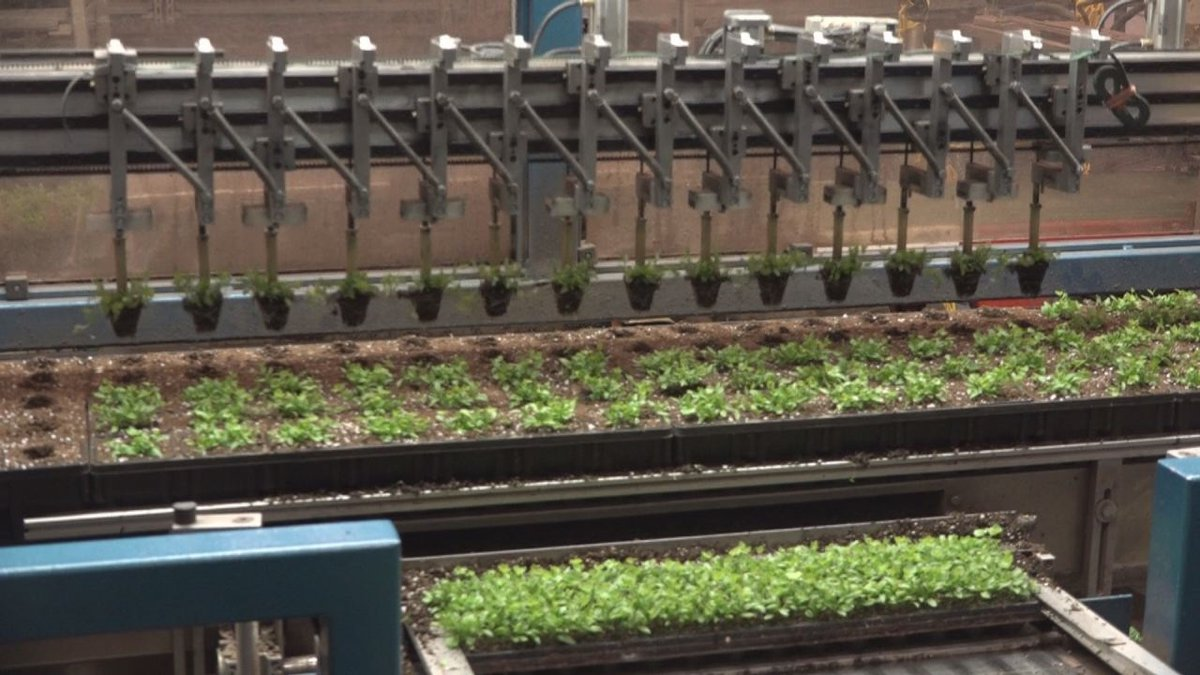 Shenandoah Growers produces certified organic herbs using indoor farming techniques.