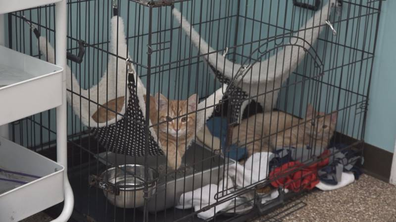 Cats in the shelter lobby as they face overcrowding on Sept. 27. (WHSV)