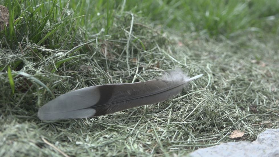 Wildlife officials are getting preliminary results after finding many dead birds in Harrisonburg