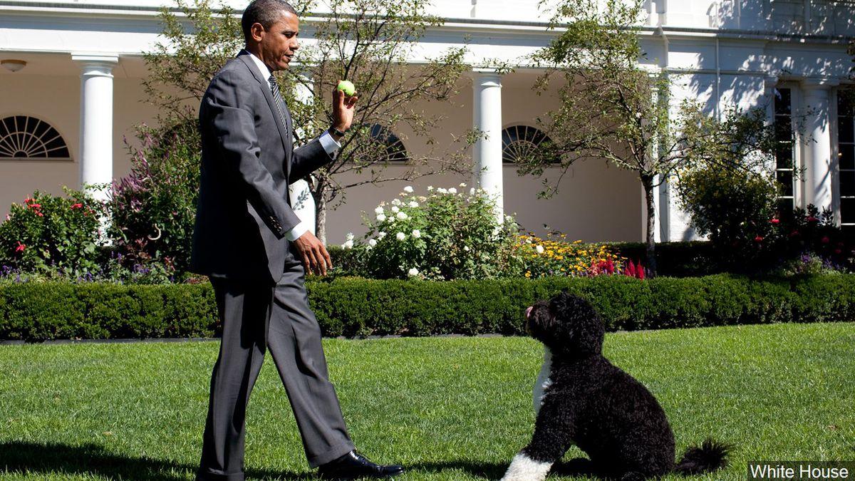 President Barack Obama throws a ball for Bo the family dog in the Rose Garden of the White House