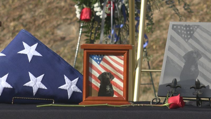 Cara died on Dec. 21 while on duty with her partner, Cpt. Ryan Insana. She was trained as a...