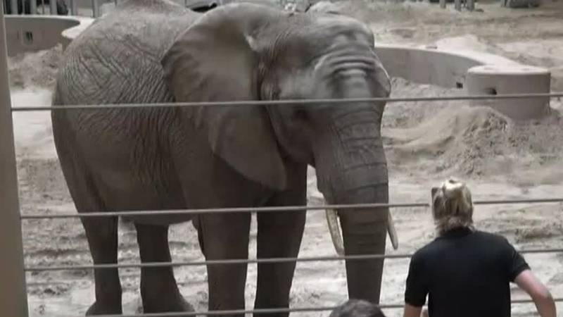 Two elephants are pregnant at a Omaha zoo.