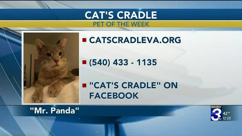 Pet of the Week - December 9