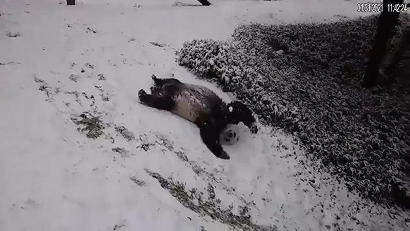 Slides, somersaults and pure panda joy.