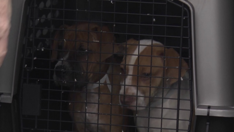 The Augusta County SPCA was on hand at the Shenandoah Valley Regional Airport Friday to receive...