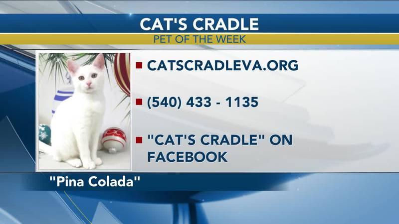 Pet of the Week - November 4