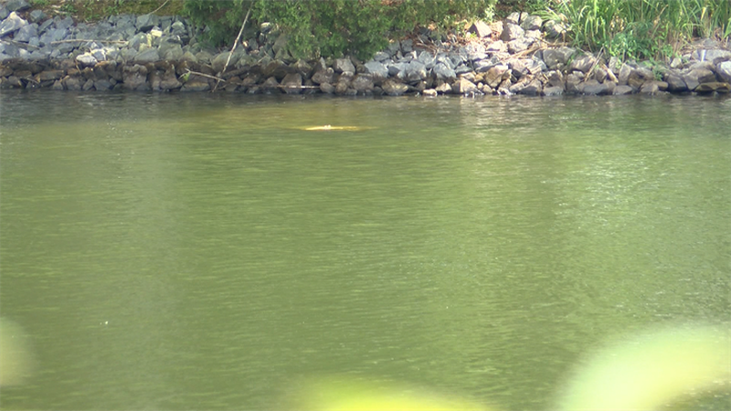 Sections of Lake Anna are seeing high levels of bacteria (Source: NBC12)