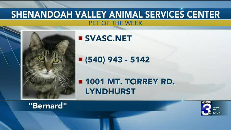 Pet of the Week - February 17