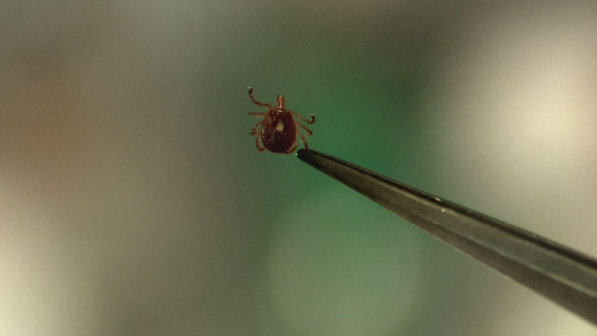 Getting a tick can be easily prevented by wearing protective clothing.