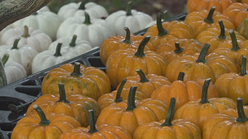 One local farm prepares for Fall activities with COVID-19 safety measures.
