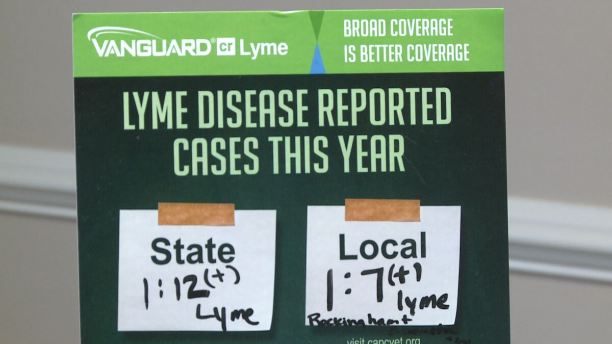 1 in 7 dogs in Rockingham County get Lyme Disease