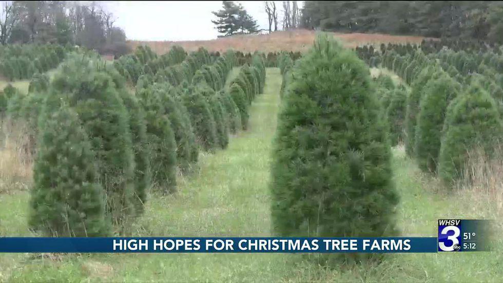 Christmas tree farmers have high hopes for the holiday season