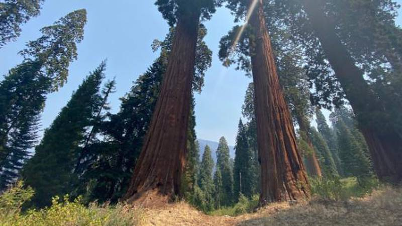 The fires forced the evacuation of Sequoia National Park this week, and additional areas in the...