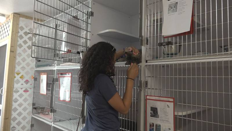 A guest visits with cats at the Shenandoah Valley Animal Services Center on Friday, July 23....